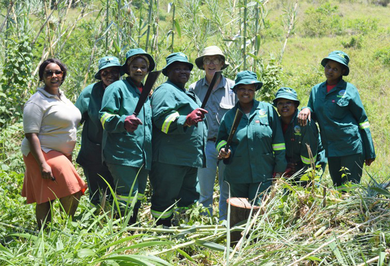 New hope for Umdloti forest